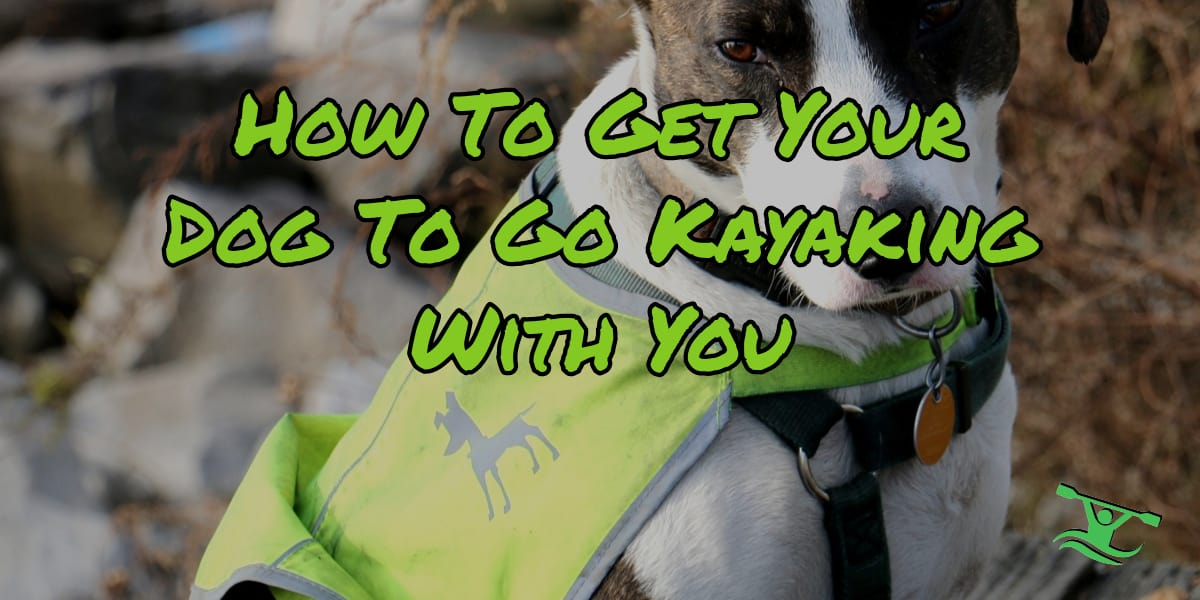 Training Your Dog for Kayaking