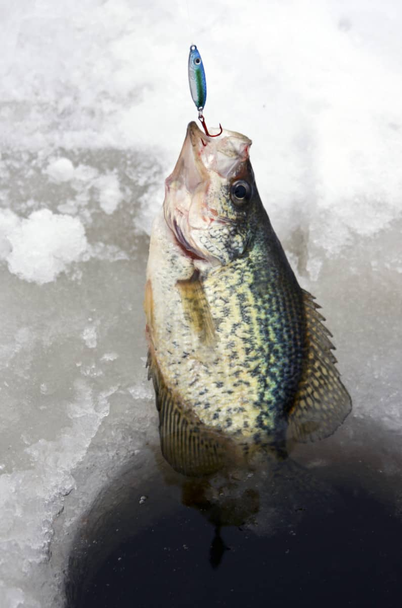 Crappie Fishing Facts And Tips
